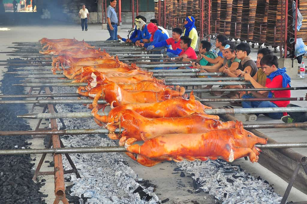lechon cooking