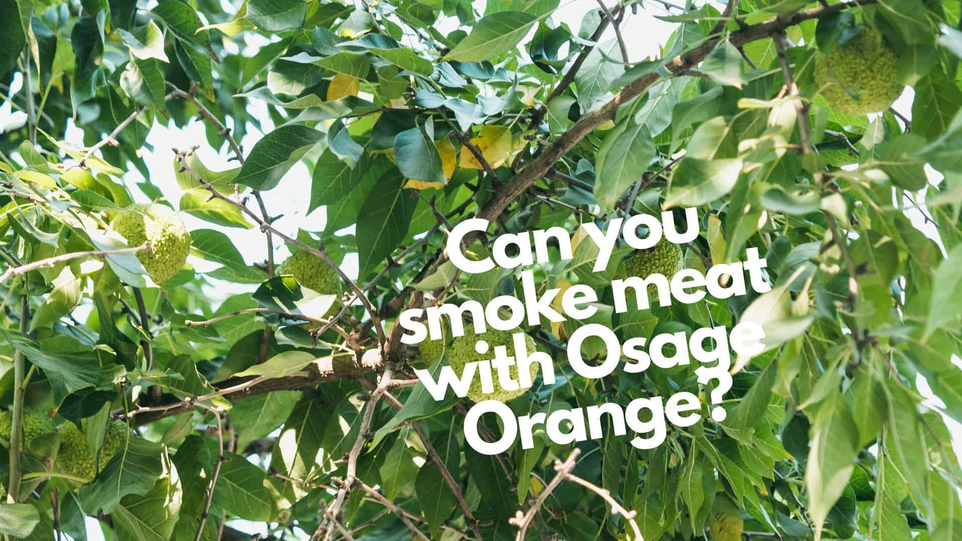 Can you smoke meat with Osage Orange? Yes, and here's how