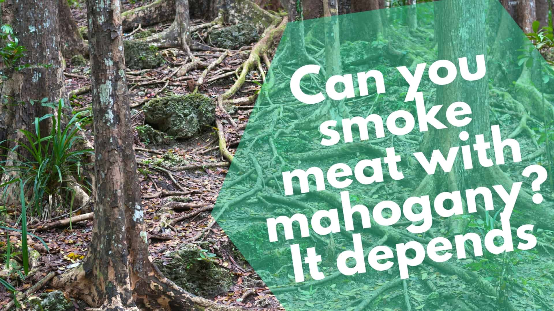 Can You Smoke Meat with Mahogany? It Depends!