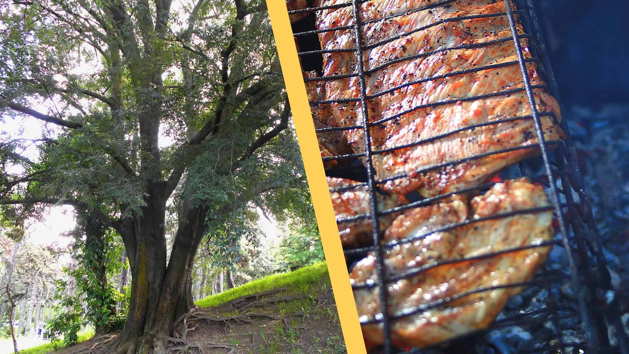 Is Hackberry Good for Smoking Meat?